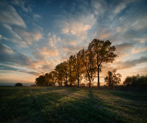 Autumn sunset over trees and field