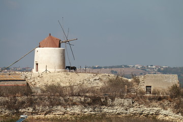 Landscape with windmill and horse in Vejer, Spain