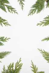 Frame with Japanese cypress evergreen leaves