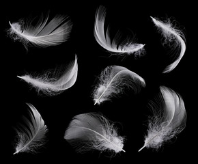 Collection of white feather isolated on black background
