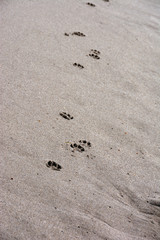 Animal Paw Prints At The Beach In The Ocean Sand