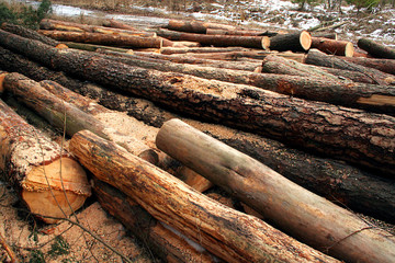 Felled tree trunks