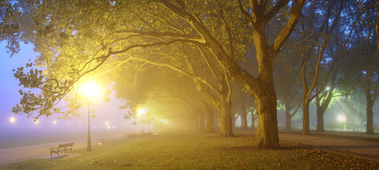 foggy, night images of autumn park, light lamps diffuse through the fog and trees