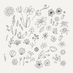 Doodle collection with various doodle flowers, leaves and branches.
