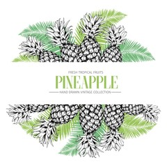 Vector hand drawn template illustration of pineapples isolated on palm tree leaves. Fresh tropical fruit engraved