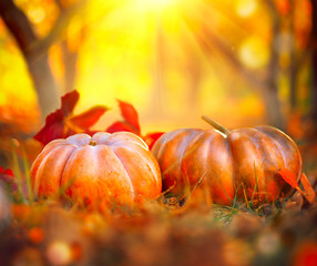 Orange pumpkins over bright autumnal nature background. Harvest concept