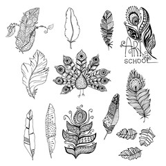 Doodle black and white monochrome graphic feathers set, peacock animal. Line art vector illustration