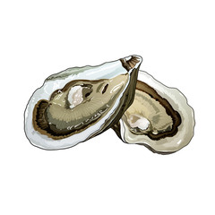 Oyster, Isolated Illustration