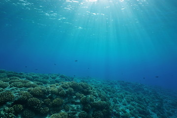 Underwater coral reef ocean floor with sunlight through water surface, natural scene, fore reef of Huahine island, Pacific ocean, French Polynesia