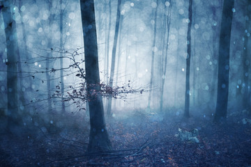 Wall Mural - Magical blue colored foggy forest fairytale with bokeh. Fantasy colored autumn woodland. Color filter effect used.
