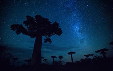Fotorolgordijn Baobab Starry sky and baobab trees. Madagascar