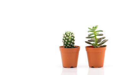 Cactus On White Background