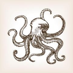 Octopus sea animal sketch vector illustration