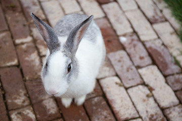 single white and grey color rabbit on brick ground