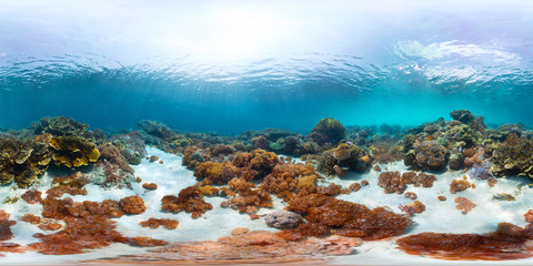 Spherical, 360 degrees, seamless panorama of the sea floor with corals