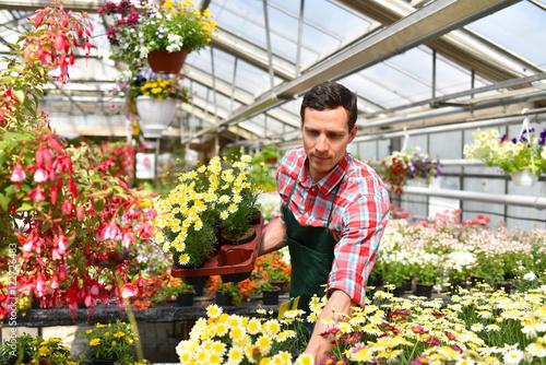 Gärtner mit Blumen in einem Gewächshaus // Gardener with flowers in ...