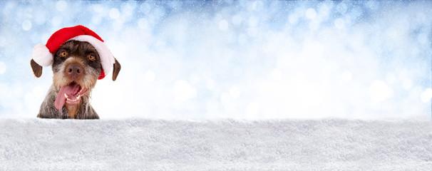 Banner mit Schnee, Himmel und Hundekopf mit Nikolausmütze