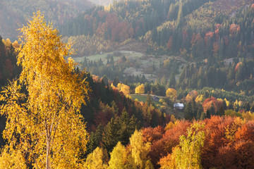Autumn landscape with deciduous forest in the mountains