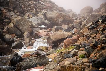 Creek and fog