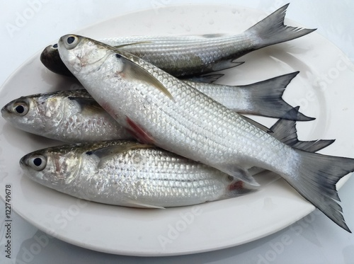 Fresh mullet fish prepared on white plate for cooking for Eating mullet fish