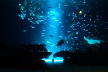 水族館 水槽 幻想的な 照明 ライトアップ