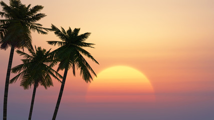 palm trees on a background of tropical sunrise