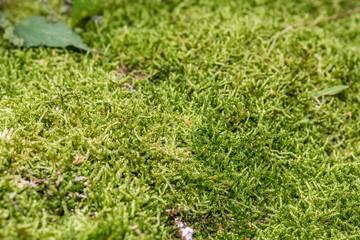 macro photo of moss