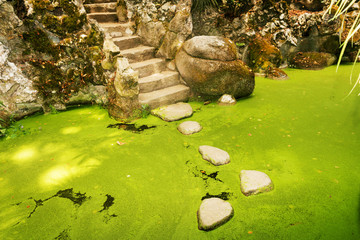 Stepping stones over the green pond in the garden