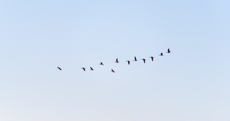 Birds flying in a sunny sky at fall