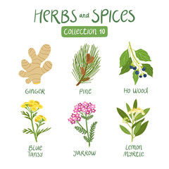 Herbs and spices collection 10