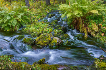 Wild stream flowing in autumnal forest