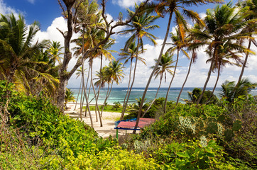 Exotic beach with palm trees in Caribbean. Anse Michel Beach, Cap Chevalier, Martinique, Caribbean
