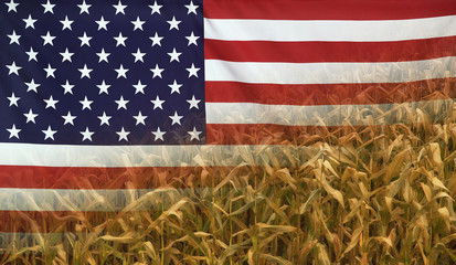 USA Nutrition Concept Corn field with fabric Flag