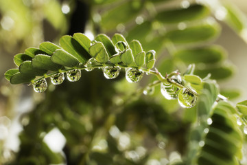 Close up of wet green leaves on twig