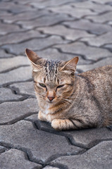 Sleepy tabby cat  on the floor ,brown Cute cat, cat lying, playful cat relaxing vacation, vertical format, selective focus