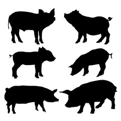 Pig silhouettes set. Vector illustration