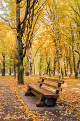 A bench in the autumn park among yellow and green trees