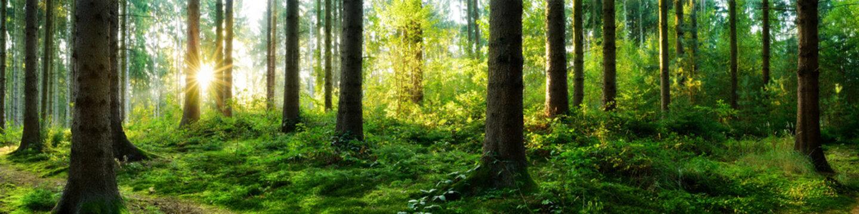 Verträumter Sonnenaufgang im herbstlichen Wald