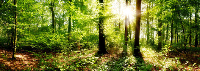 Fototapete - Verträumter Sonnenaufgang im herbstlichen Wald