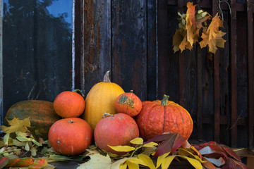 Big bright orange pumpkins on old dark wooden background. Autumn halloween background.