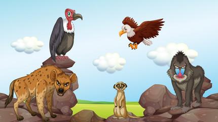 Wild animals standing on rocks
