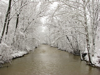 Snow covered trees arching over river