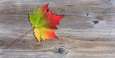 Single vibrant autumn maple leaf on rustic wood