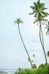 Tropical beach with palm trees, Sri Lanka