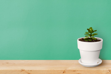Succulent plant in white pot on wooden background with copy space