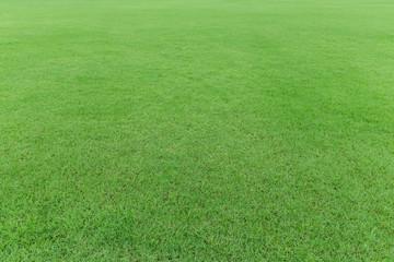 nature green grass field