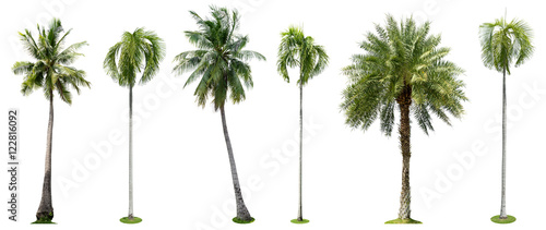 Wall mural Palm trees isolated collection on white background