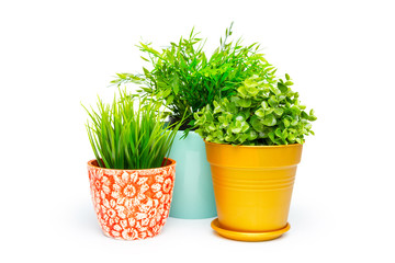 Potted house plant isolated in white background