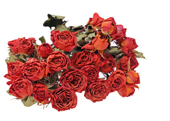 a bunch of dried rose