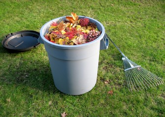 Plastic trash container full of yellow and red leaves with lid and lawn rake